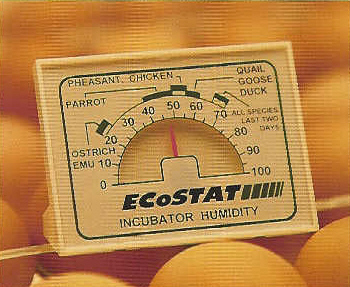 Ecostat Dial